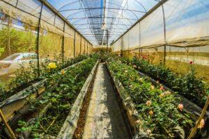 Ein Gewächshaus für Ihren Garten: So finden Sie das richtige